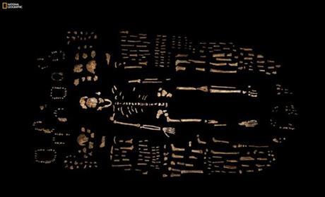 Missing link bones