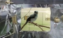 Zookeepers use puppet to raise this endangered bird (pic!)